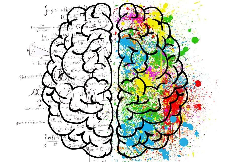 Neuro-mythes : êtes-vous cerveau droit ou cerveau gauche ?