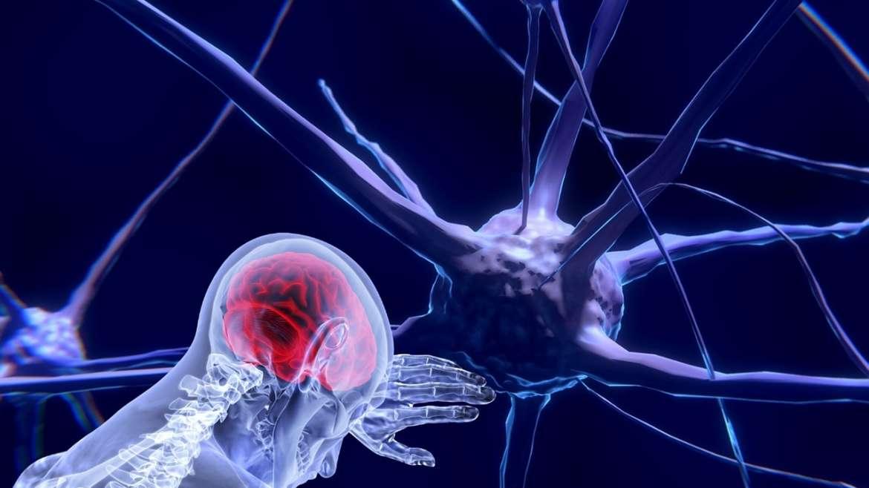 Neuro-mythes : nous n'utilisons que 10% de notre cerveau